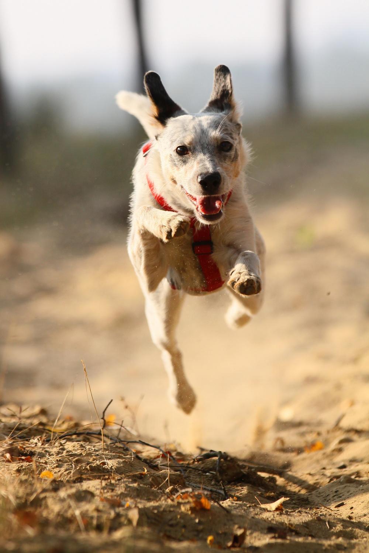 Kleiner Hund fliegt