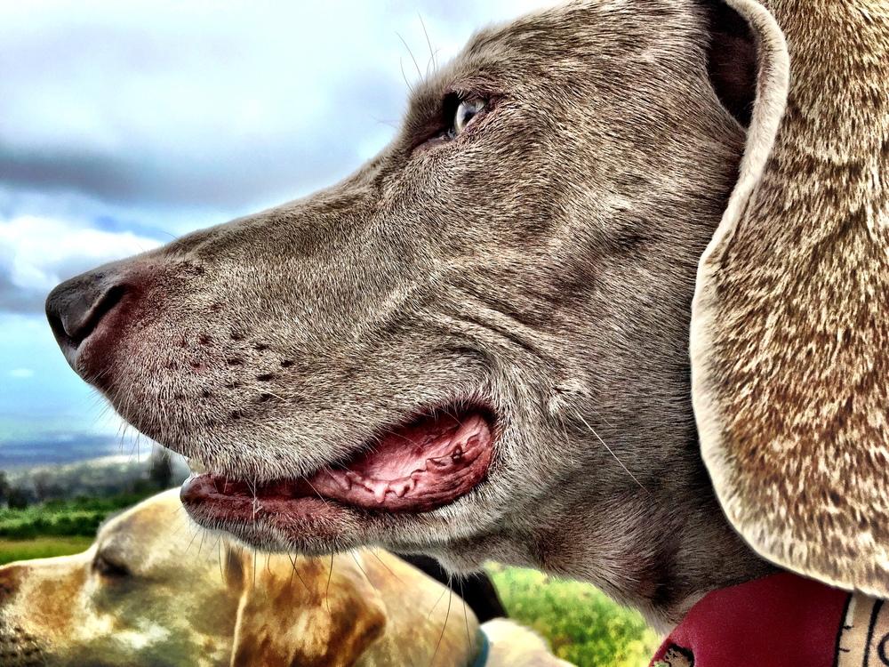 Carmella-Dog-LoveJPG
