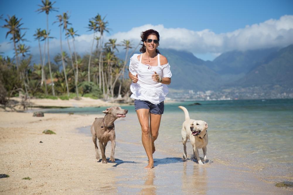 Best Dog Training Aggressive Dogs San Diego
